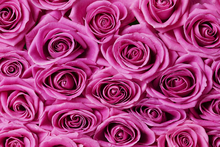 Impression sur toile - Roses - Pink