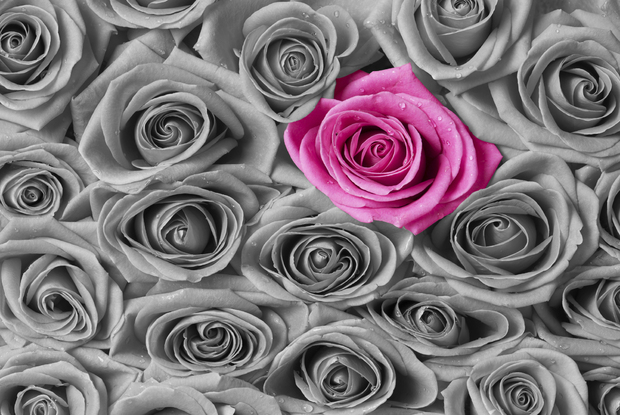 Roses pink and grey canvas print canvas art photowall for Red and grey wallpaper for walls