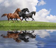 Wall mural - Gallop Horses