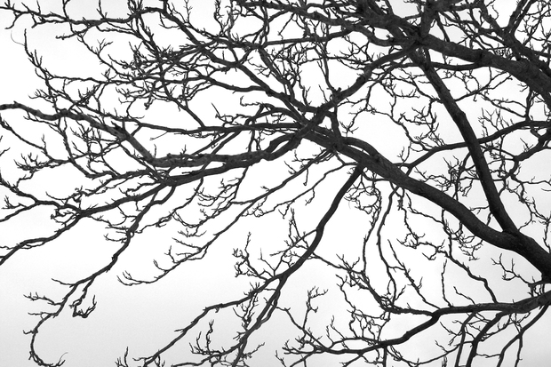 Black and white tree wall mural photo wallpaper for Black tree mural