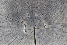 Canvastavla - Tree Trunk Showing Growth Rings