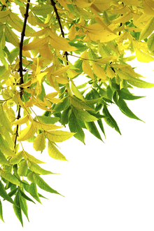 Lærredsprint - Green and Yellow Leaf