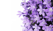 Фотообои - Purple Flowers