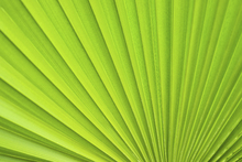 Lærredsprint - Palm Leaf Detail