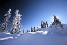 Fototapet - Fresh Snow