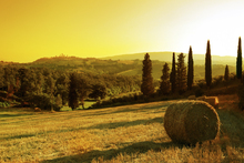Canvas print - Sunset Tuscany Landscape