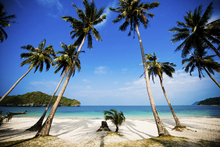 Canvas-taulu - Coconut Palms, Thailand
