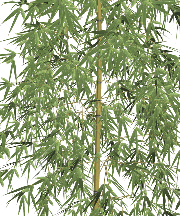 Bamboo tree wall mural photo wallpaper photowall for Bamboo mural wallpaper
