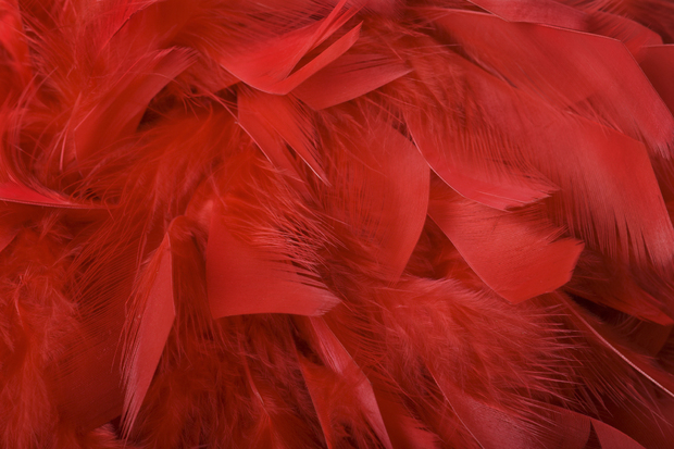 Red Feathers Wall Mural Amp Photo Wallpaper Photowall