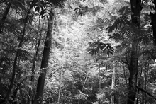 Wall mural - Steamy Forest - b/w