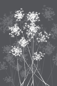 Canvas print - Dandelions - Grey