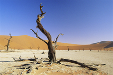 Fototapet - Namib Desert