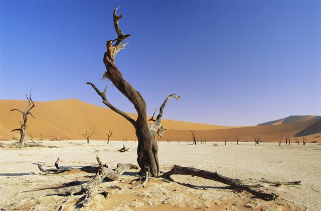 Namib desert wall mural photo wallpaper photowall for Desert wall mural