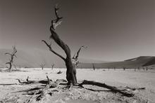 Fototapet - Namib Desert - Sepia