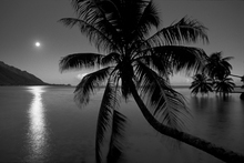 Wall mural - Dream Island  - b/w