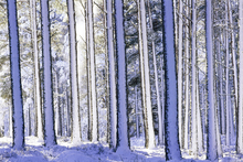 Impression sur toile - Winter Forest