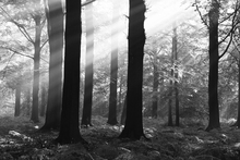 Canvas print - Morning Sunshine - b/w