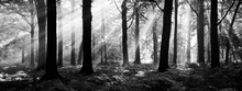 Canvas print - August Morning - b/w