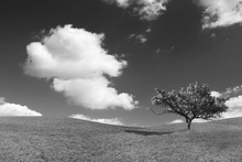 Fototapet - Lonely Tree - b/w