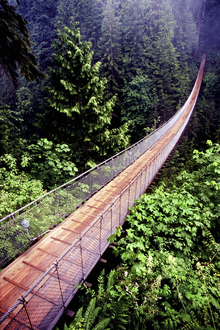 Wall mural - Capilano Bridge