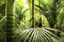 Fototapet - Vegetation