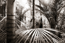 Canvas-taulu - Vegetation - Sepia