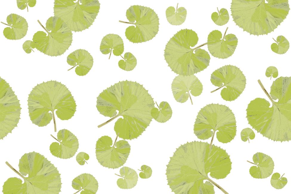 leaf green wall mural photo wallpaper photowall