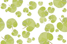 Wall mural - Leaf - Green