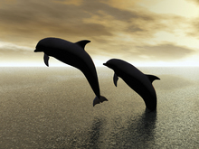 Canvas-taulu - Dolphin Silhouettes