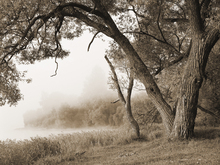 Fototapet - Tree in a Fog