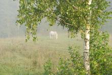 Fototapet - Pasture