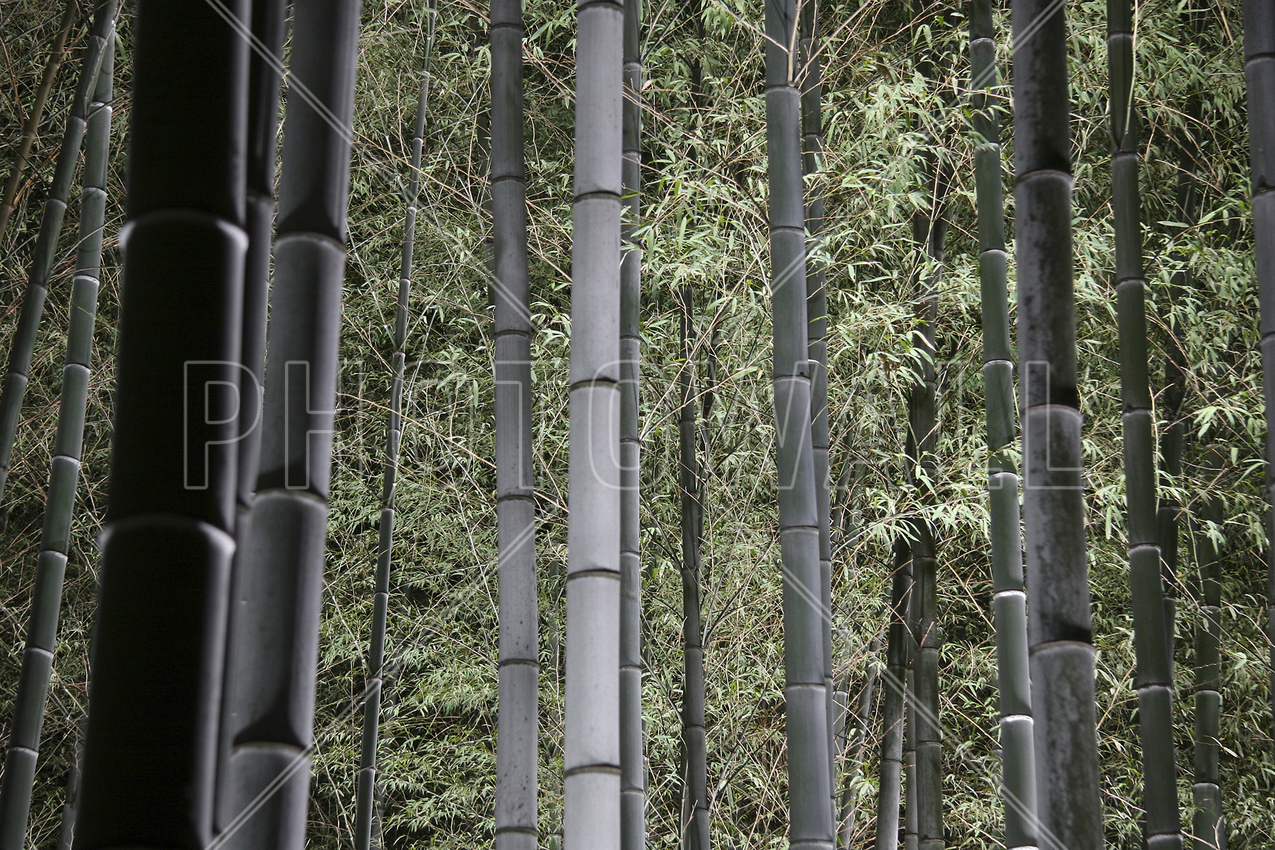 bamboo forest at night wall mural photo wallpaper photowall
