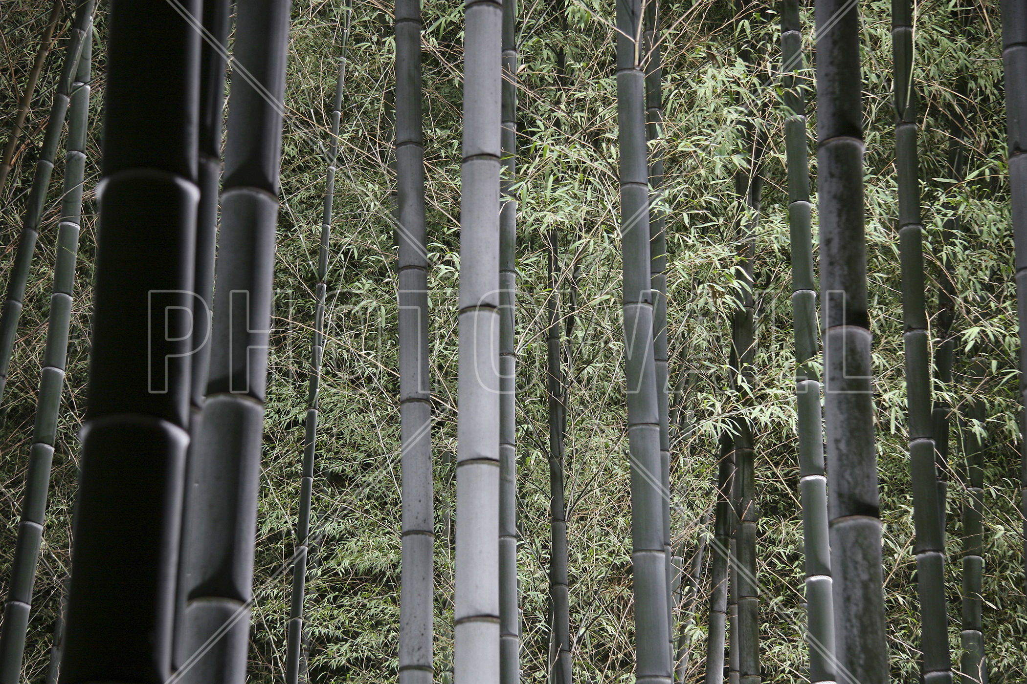 Bamboo Forest At Night Part 68
