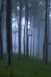 Fototapet - Mystical Forest