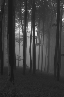 Fototapete - Mystical Forest