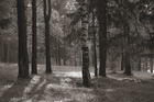 Wall mural - Forest Daylight