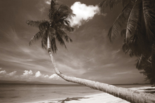 Canvas-taulu - Palm and Bliss - Sepia