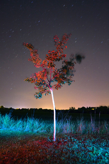 Canvas print - Mystical Tree