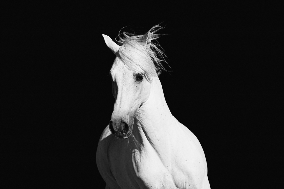 High Contrast Horse