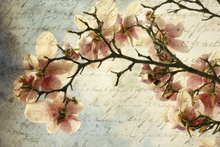Canvas print - Magnolia Memories