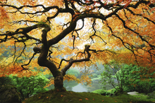 Wall mural - Autumn Maple