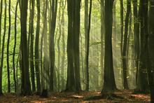 Fototapet - Fairy Forest