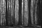 Wall mural - Fairy Forest - b/w