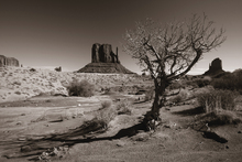 Fototapet - Arizona - Valley Navajo - Sepia
