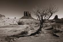 Fototapet - Arizona - Valley Navajo - Sepia