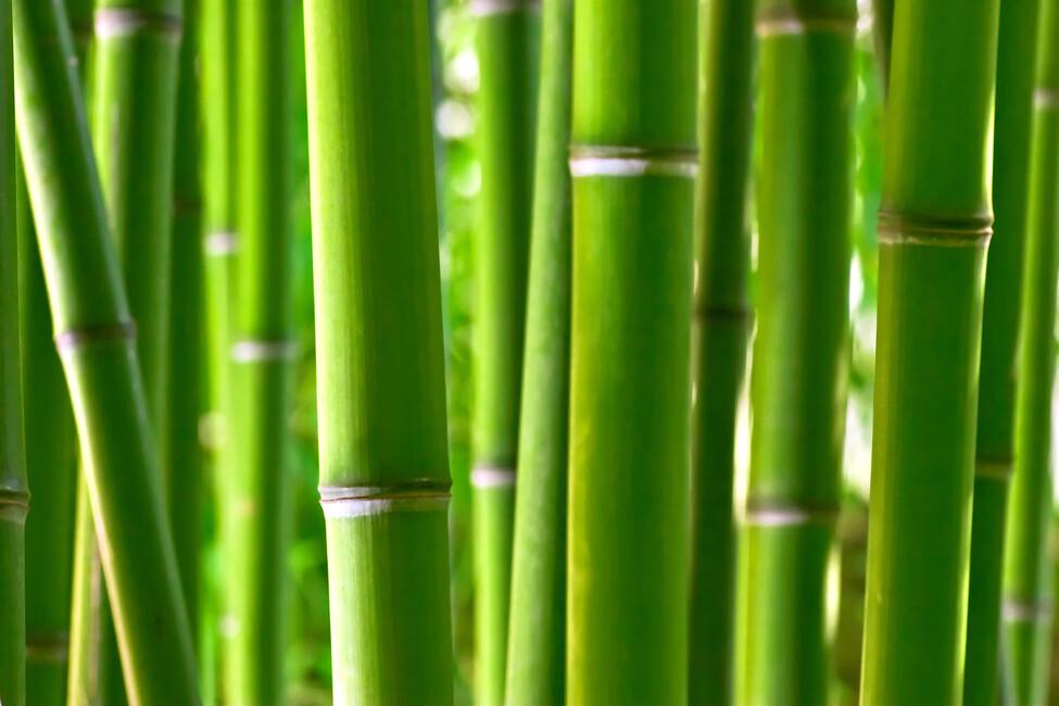 Zen Bamboo Wall Mural Amp Photo Wallpaper Photowall