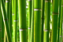 Fototapet - Zen Bamboo