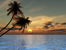 Wall mural - Coconut Palm Sunset