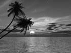 Fototapet - Coconut Palm Sunset - b/w