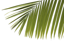 Canvastavla - Palm Leaves